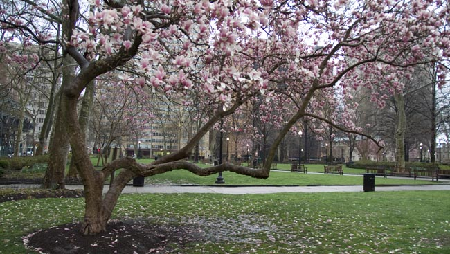 Philly parks improve quality of life