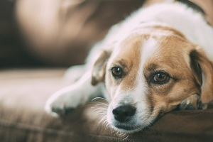 how-to-find-a-pet-friendly-rental-via-RENTCafe