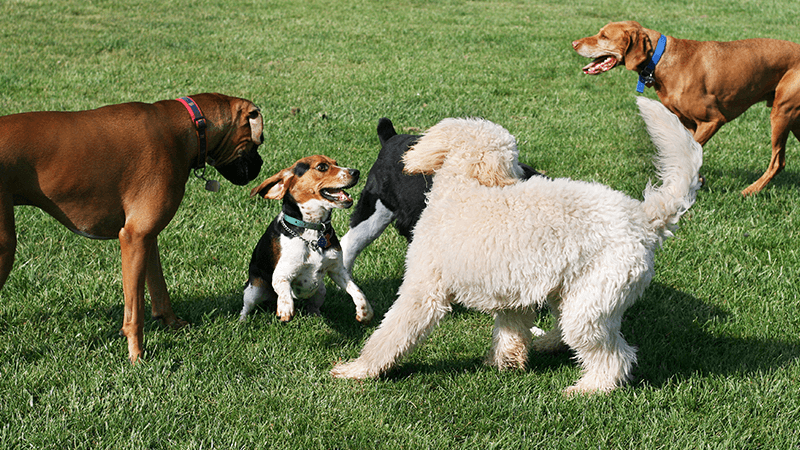 Breed Restrictions What Should You