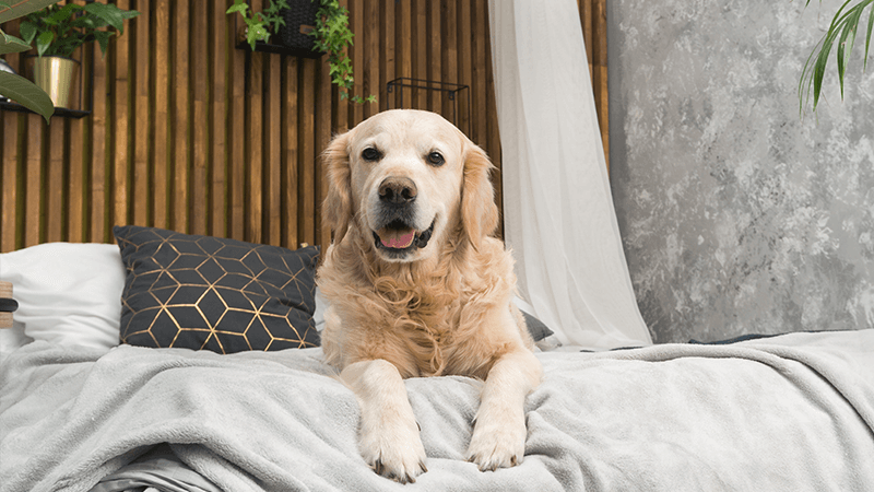Renting with pets - breed restrictions