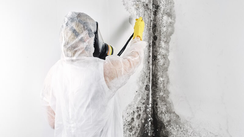 expert cleaning mold