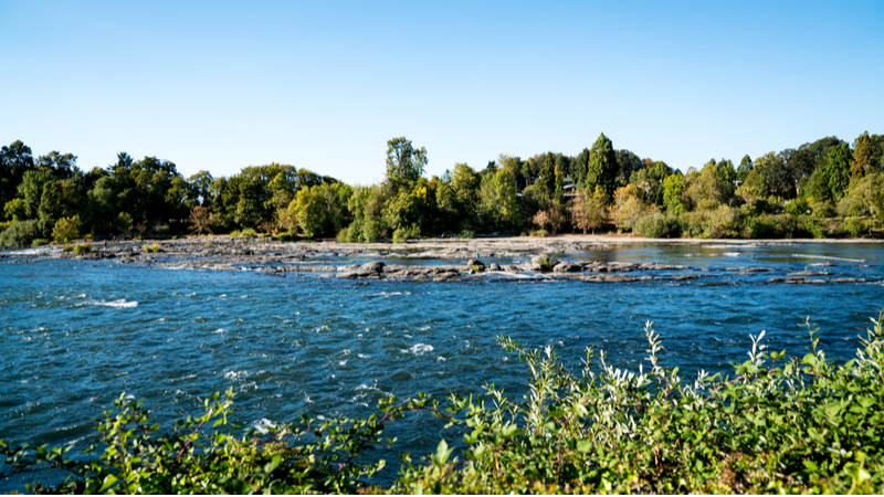 Wilamette river Springfield OR