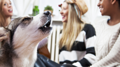 prevent dog barking in apartment