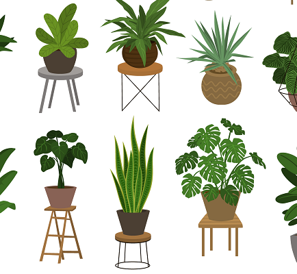 best plants for apartments